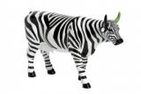 Kráva zebra
